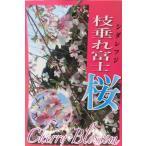 富士桜の希少なしだれタイプです☆大きな植木苗木です☆