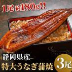 静岡県産うなぎ蒲焼 特大 3尾セット 国産 うなぎ 鰻 ウナギ 2021 グルメ 国内産 60代 70代 80代