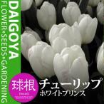 チューリップ 一重咲き ホワイトプリンス(白)【球根】5球入り袋詰め
