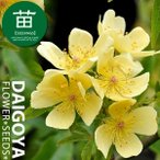 モッコウバラ(木香薔薇) 一重咲き黄花 12cmポリポット苗