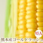 ゴールドラッシュ とうもろこし 熊本県産 約4kg 10〜13本 スイートコーン 朝採れ 新鮮 トウモロコシ 産地直送 お取り寄せ ギフト 御中元
