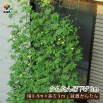 daim 緑のカーテンかんたん吊り下げ 80cm×3m【日よけ シート 日除け アサガオ 朝顔 支柱】
