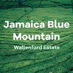 Volcanica Gourmet Coffee ジャマイカのブルーマウン