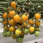 井出トマト農園 高糖度 イエローミニトマト トマトジュース 720ml/ストレート 食塩無添加 国産