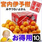 柑橘 - 愛媛県産 みやうちいよかん お得用 10kg