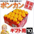 愛媛県産 ポンカン ギフト用 10kg