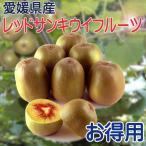 奇異果 - レッドサン キウイフルーツ お得用3kg
