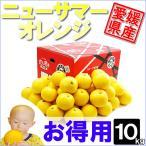 ニューサマーオレンジ お得用 10kg