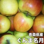 青森県産ぐんま名月 約10kg 訳あり 幻のりんご