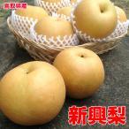 鳥取県産新興梨 約5kg 6〜18玉入 ご家庭用