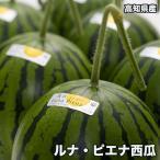 高知県産ルナピエナ西瓜 約1.5kg以上(夜空) ※北海道・沖縄県は送料必要