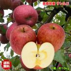 りんご 訳あり 10kg 青森県産 サンふじ りんご 10Kg 送料無料 糖度保証 りんご 訳あり 10Kg