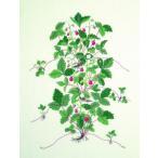 フレメ クロスステッチ 刺繍キット 【野いちご】 野の花 デンマーク 輸入ししゅうキット