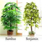 人工 観葉植物 ベンジャミン & 観音竹 2点セット   樹木  フェイク グリーン 癒し リラックス インテリア  空間 飾り お手入れ要らず