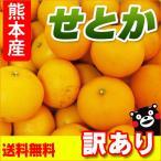 せとか 熊本産 訳あり 5kg  送料無料  セトカ みかん オレンジ 柑橘 完熟 九州 熊本