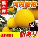 熊本産  訳あり 河内晩柑 5kg  送料無料  ( 九州 熊本 みかん ジューシーオレンジ バンカン 柑橘 オレンジ )
