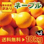 熊本産  訳あり ネーブル  10kg  送料無料  【 九州 熊本  網田 みかん 柑橘 オレンジ 】