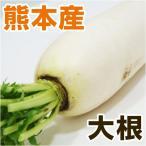 熊本産 大根 1本 ( 野菜セット と同梱で送料無料 ) ( 根菜 おでん 煮物 漬物 )