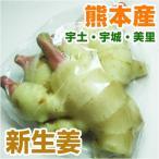 熊本産  新生姜 1パック  ( 野菜セットと同梱で送料無料 九州 熊本 ショウガ しょうが 薬味 根菜 )