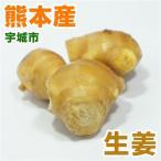 熊本産  生姜  1パック(約150g)   ( 野菜セット と同梱で送料無料 )  九州 野菜 シ...