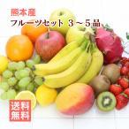 熊本産  フルーツセット ( 旬の果物と野菜セット ) クール便 送料無料  ( 野菜 果物 盛り合わせ セット 熊本 )