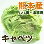 熊本産 キャベツ 1玉 ( 野菜セット と同梱で送料無料  葉もの 野菜 九州 熊本 きゃべつ サラダ )