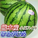 熊本産  小玉 スイカ 1玉 ( 野菜セット との同梱で送料無料 )( 九州 熊本 すいか  西瓜 ギフト )