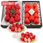 お歳暮 送料無料 直送 (博多あまおう・さぬきひめ) 人気いちごの味くらべ  H-IT  2種 各約270g  ( 苺 イチゴ果物 フルーツ 詰合せ )ybk-H-IT