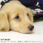 ナショナル パナソニック スリムファン 扇風機 F-S1XJ 用 リモコン National Panasonic FFE2810209