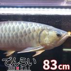 アロワナライト水中LED 90cm水槽 金龍 DENRAI83K -型番A009-