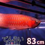 アロワナ照明 R83 紅龍用水中LEDライト 赤 90cm水槽用 -型番A001-
