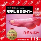 アロワナ照明 R113 紅龍用水中LEDライト 赤 120cm水槽用 -型番A002-