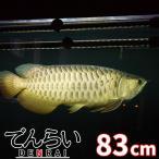 DENRAI83G 金龍用水中LED照明 ゴールド 90cm水槽用 -型番A013-