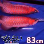 アロワナ照明 R83-level2 赤み増量版 紅龍90cm水槽用 -型番A005-