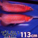 アロワナ照明 R113-level2 赤み増量版 紅龍120cm水槽用 -型番A006-