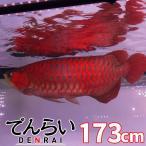アロワナライト 紫外線LED 紅龍180cm水槽用 水中照明 -型番A020-
