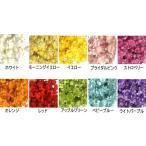 スターフラワー ドライフラワー 花材 全10色
