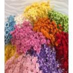 スターフラワーブロッサム ドライフラワー 花材 全10色