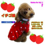 犬服 イチゴ服(超小型犬・小型犬・中型犬用)犬の服2点購入でメール便送料無料 ストロベリー ドッグウェア