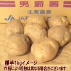 野菜・種/苗 春じゃがいも種芋 男爵 馬鈴薯種芋 1kg