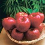 (自家用:予約販売・送料込:12月初旬から出荷予定)期間限定!信州りんご 特選完熟サンふじ3kg(約9個入)