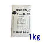 西洋芝 種子 バミューダグラス 1kg 100〜125平米分