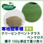 西洋芝 種子 クリーピングベントグラス ペンクロス 100g 5〜8平米分