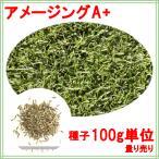 西洋芝 種子 ペレニアルライグラス アメージングGS 100g 1〜4平米分