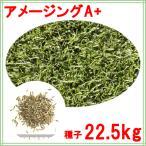 【送料無料】種子 ペレニアルライグラス アメージングGS 22.5kg【原袋のままお届け、お徳用】280〜900平米分