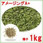 西洋芝 種子 ペレニアルライグラス アメージングGS 1kg 12〜40平米分