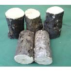 産卵木 (良質ナラ材) Bクラス 中サイズ