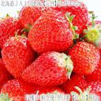 北海道産 いちご イチゴ さがほのか 600g (大粒 3L-2L 北海道 JA富良野 JA上川地域 秀品)上品で濃厚な味、ギフトにも大好評、高評価ありがとうございます!