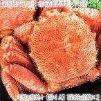 毛蟹 - 毛ガニ 北海道 雄武産(大型)420g前後×2尾 (北海道産 ボイル済み 最高級)甘い蟹身 濃厚な蟹味噌は絶品。ギフトに大好評、高評価ありがとうございます!
