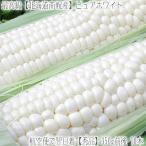 北海道産 ピュアホワイト 大粒 2L 10本(北海道 トウモロコシ 350g前後 南幌町)北の大地の香りと上品な甘み、ギフトにも大好評、高評価ありがとうございます!